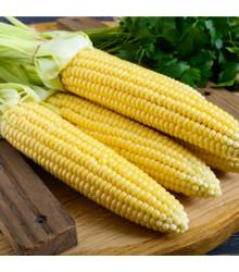 Kukurica cukrová Minigold k nakládání- Zea Mays - semená Kukurica - 4 g