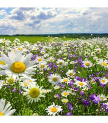 Slnečná stráň - pravé lúčne kvety - semená - 10 g