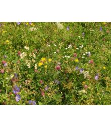 Záhradná lúčka - semená lúčnych kvetov a tráv - 10 g