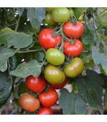 Paradajka Crimson Crush F1 - kolíková odroda - predaj semien paradajok - 7 ks