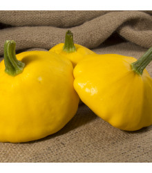 Patizon Golden Marbre - Cucurbita pepo - 5 ks