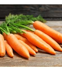 BIO mrkva Rothild veľmi skorá - bio semiačka - Daucus carota- 0,5 g