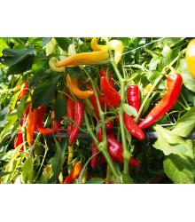 Paprika Harriet Kozí roh - Capsicum annuum - semená - 45 ks