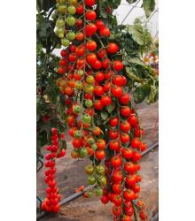 Paradajka Charmant F1 - kolíková paradajka - Solanum lycopersicum - 10 ks