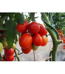 Paradajka Sonet F1 - kolíková paradajka - Lycopersicon lycopersicum - predaj semien - 20 ks
