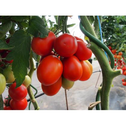 Paradajka Sonet F1 - kolíková paradajka - Lycopersicon lycopersicum - predaj semien rajčiaka - 20 ks