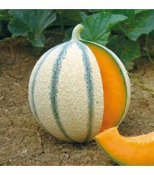 Melón cukrový - Anasta F1 - Cucumis melo - semená melónu - 6 ks
