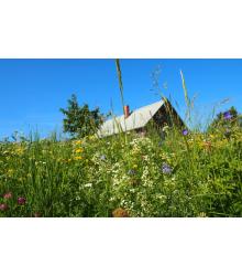 Chalupárska lúka - semená lúčnych kvetov a tráv - 50 g