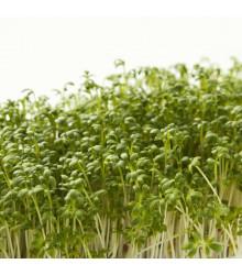Žerucha zahradná Dánska - Semená Žeruchy - Semiačka - 850 ks