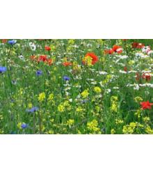 Vytrvalé Kvety Pre Včely - Semená - 50 G
