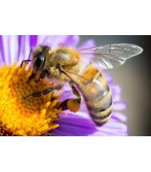 Jednoročné Kvety Pre Včely - Semená - 50 G