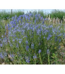 Modrá Lúka Zvončeková - Semená Lúčnych Kvetín A Tráv - 50 G