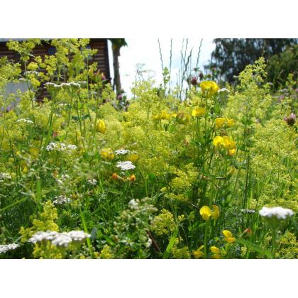 Žltá lúka - Semená lúčnych kvetín a tráv - 50 g