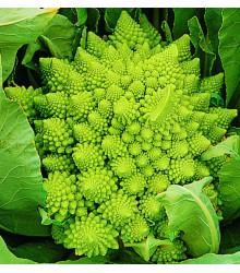 More about Karfiol Veronica F1, semiačka karfiolu, predaj zeleniny, hlúbová zelenina - semiačka - 10 ks