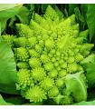 Karfiol Veronica F1, semiačka karfiolu, predaj zeleniny, hlúbová zelenina - semiačka - 10 ks