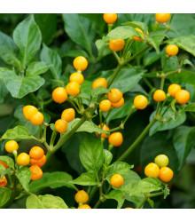Chilli - Aji Charapita - Capsicum Chinenses - Semená - 7 Ks