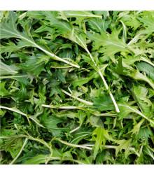 BIO Rukola Roma - Diplotaxis tenuifolia - BIO semiačka - 0,1 g