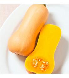 Bio tekvica Butterscotch F1 - Cucurbita moschata - predaj bio semien - 5 ks