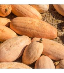 BIO tekvica Pink Jumbo Banana - Cucurbita Maxima - predaj bio semien - 5 Ks