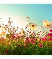 Letničky zmes - romantická záhrada - semiačka - 0,9 gr