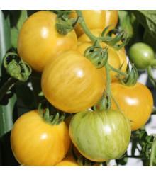 BIO paradajka kolíková koktejlová Topaz - Solanum lycopersicum - predaj semien - 6 ks