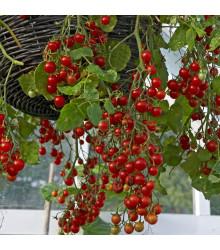 Previsnuté kríčkové Cherry rajčiny Tumbler - Lycopersicon esculentum - predaj semien - 6 ks
