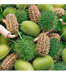 Uhorka okrasná - Cucumis insignis - predaj semien - 6 ks