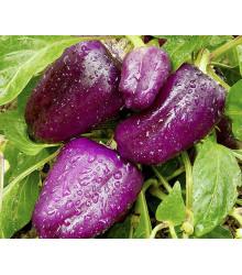 Paprika fialová Oda - Capsicum annuum - predaj semien - 9 ks