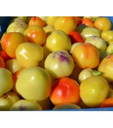 Paprika rajčiaková Nagykuti - Capsicum annuum - predaj semien - 7 ks