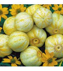 BIO uhorka Lemon - Cucumis sativus - predaj bio semien - 8 ks