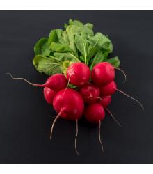 Reďkovka Raxe - predaj semien reďkovky - 0,5 g
