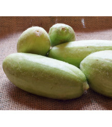 Zeleninový melón - Carosello Baresey - Cucumis flexuosus - predaj semien - 7 Ks