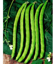 BIO fazuľa Neckarkönigin - popínavá odroda - Phassseolus vulgaris - bio semená - 15 ks