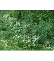 Kvetnatý podrast do tieňa - Semená lúčnych kvetín a tráv - 50 g
