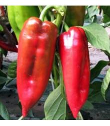 Paprika ročná Rafaela F1 - kápia - Capsicum annuum - predaj semien - 9 ks