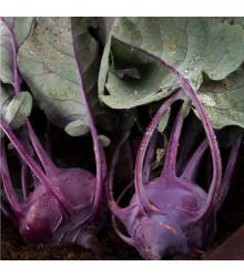BIO Kaleráb Azur - BIO semiačka - Brassica oleracea - 70 ks