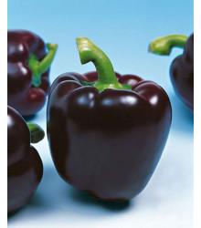 Paprika Mavras - Capsicum annuum - predaj semien - 8 ks