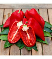 Paprika Snackling Red F1 - Capsicum annuum - predaj semien - 5 ks