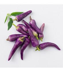 More about Chilli Jalapeno fialové - Semená chilli - Capsicum annuum - 6 ks