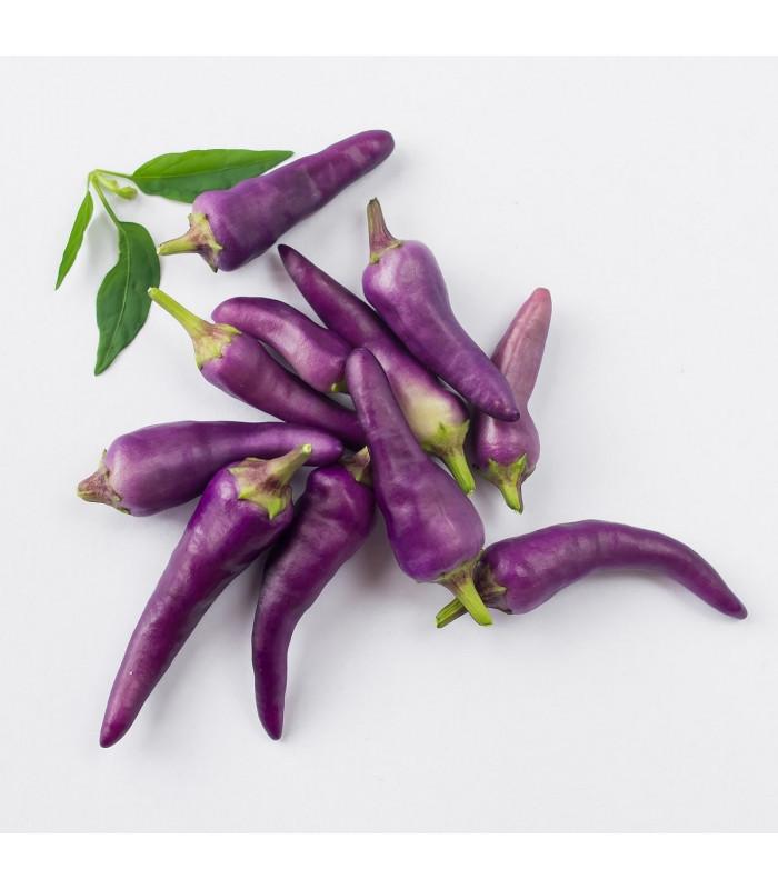 Chilli Jalapeno fialové - semená chilli - papričky - 6 ks