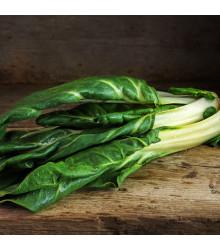 BIO Mangold Lucullus - Beta vulgaris - bio semienka - 45 ks