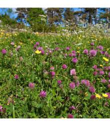 Lúka na suchú pôdu - kvetnatá - predaj semien - 10 g