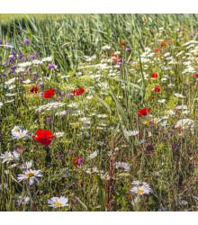 Lúčne kvety pre obohatenie porastu - predaj semien - 10 g