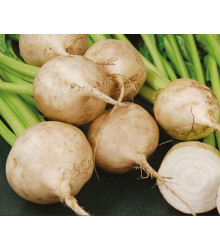 Repa biela šalátová Avalanche - Beta vulgaris - predaj semien - 50 ks