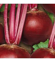 Repa šalátová Pablo F1 - Beta vulgaris - predaj semien - 50 ks