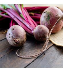 BIO Repa šalátová Chioggia - Beta vulgaris - bio semienka - 40 ks