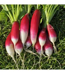 BIO Reďkev Francúzske raňajky - Raphanus sativus - bio semienka - 80 ks
