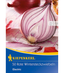 Cibuľa sadzačka červená Electric - Allium cepa - cibuľky - 50 ks
