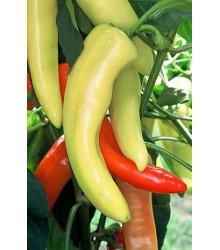 Chilli maďarský vosk - Semená chilli - Capsicum annuum - 6 ks