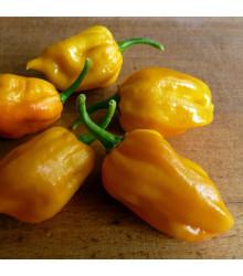 Kubánske Chilli Habanero - Semiačka chilli - Capsicum annuum - 6 ks